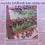 Ekologiskt jordbruk kan rädda bina