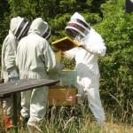 Kurs i Ekologisk biodling på Folkuniversitetet