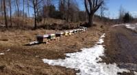Idag var jag ute på besök hos mina bin. Den mesta snön har nu smält undan och bina patrullerar flusteröppningen och har börjat städa botten själva. Någon enstaka dag har […]