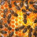 Honung både nyttigt och gott