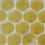 Honung är antibakteriell - användas istället penicillin?