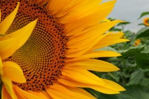 Skillnad på honungen i färg och smak Sveriges Biodlares Riksföbund släppte i juni en förklaring kring hur smaken och konsistensen på honungen kan skiljas åt trots att bikuporna står på […]