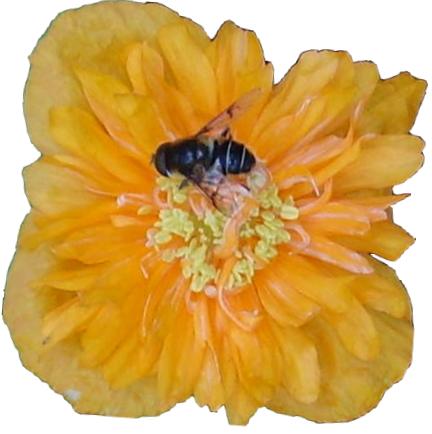 Det finns en massa skäl till att välja svensk honung. Inte minst för att gynna det svenska jordbruket och närproducerad mat. Utöver binas binas arbete med att samla honung är […]