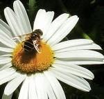 Grattis till Burseryds biodlareförening som firar 100 år jubileum