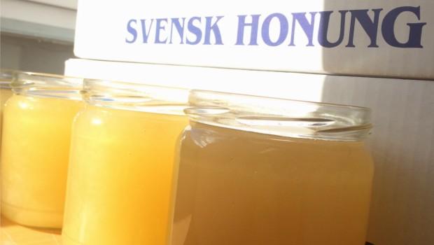 """Forskare: """"Honung kommer snart ersätta antibiotika"""" Mycket intressant forskning pågår på Honung. Alla känner vi till att honung är nyttigt och det är allmänt känt över hela världen att […]"""