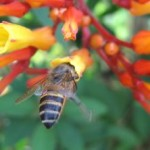 Honungsbiet och bisamhällets sjukdomar