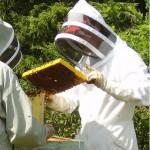 Pollen i honung