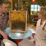 Hur farliga är bin?