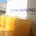 """Forskare: """"Honung kommer snart ersätta antibiotika"""""""